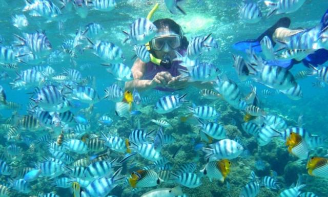 Hasil gambar untuk snorkling pulau tidung